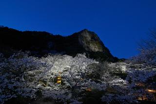桜 ライトアップ.jpg